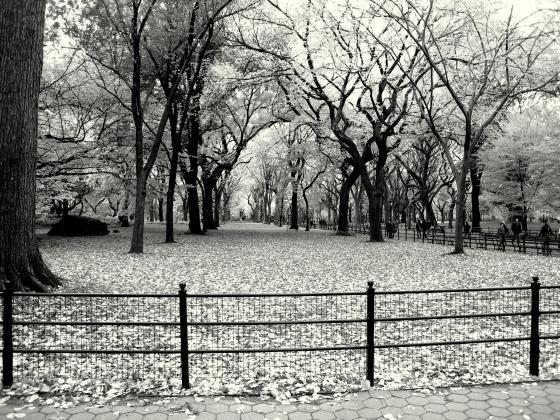 central park - Manhattan